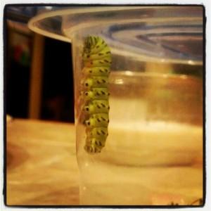 caterpillartwo
