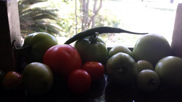 tomatoesinthewindow